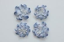 Цветы кудрявой фиалки, сине-белые
