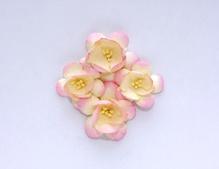 Цветы сакуры, розово-бежевые