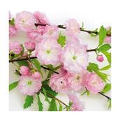 Салфетка бумажная 33*33 см (3 слоя) Flowering almond