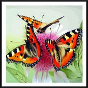 "Картина по номерам ""Бабочки на цветке"" 40х40см"