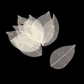 Скелетированные листочки цв. белый