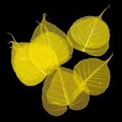 Скелетированные листочки  цв. желтый 10шт
