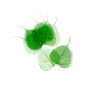 Скелетированные листочки цв. зеленый 10шт