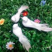 Птица декорат. Голубь бел.