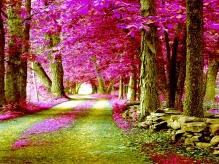 Алмазная живопись Розовые деревья 30*40см