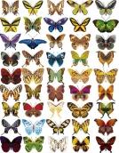 """Оверлей """"Бабочки мини"""""""
